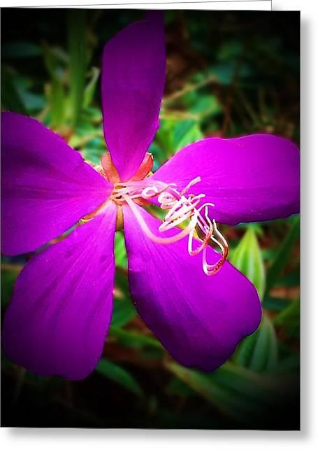 Princess Flower Greeting Card