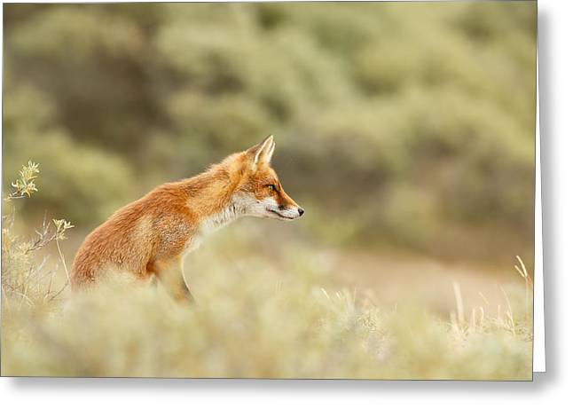 Princess Of The Hill - Red Fox Sitting On A Dune Greeting Card