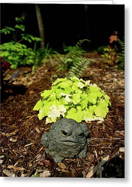 Private Garden Go Away Greeting Card by Douglas Barnett