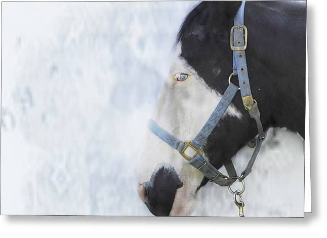 Profile In Horse  Greeting Card by Steven Digman