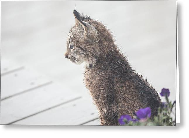 Profile In Kitten Greeting Card