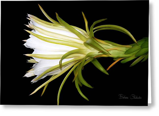 Profile Night Blooming Cereus Greeting Card