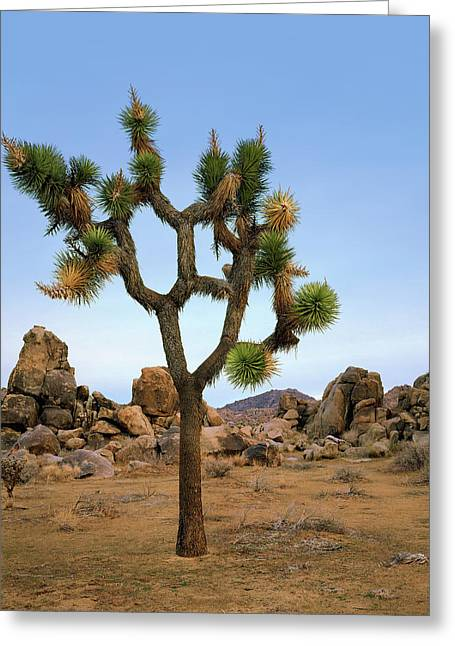Profile Of A Joshua Tree Greeting Card
