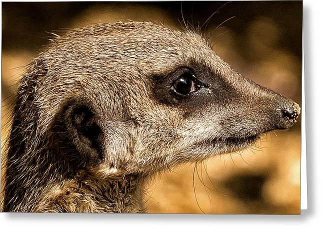 Profile Of A Meerkat Greeting Card by Chris Boulton