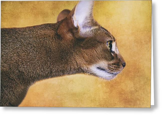 Profile Of Abyssinian Cat Greeting Card by Wolf Shadow  Photography