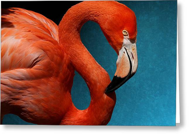 Profile Of An American Flamingo Greeting Card