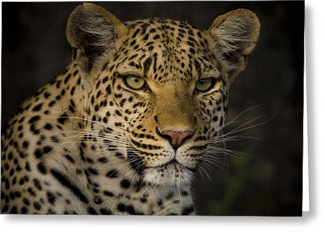 Wildcats Greeting Cards - Profile Portrait Of A Leopard Greeting Card by Beverly Joubert