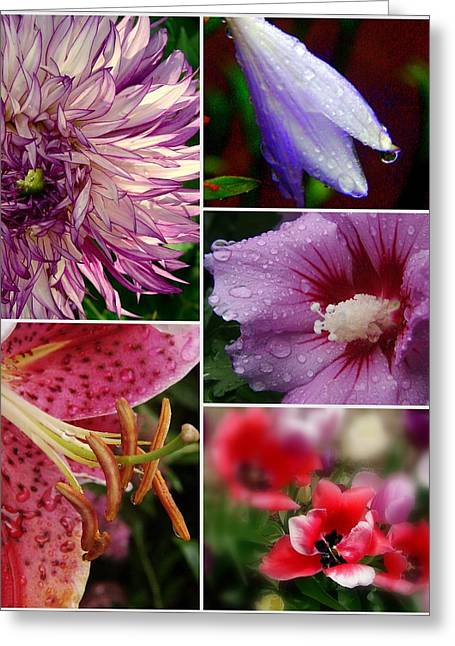 Profusion Greeting Card by Priscilla Richardson