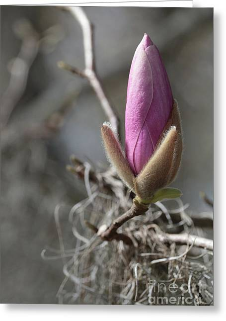 Promise Of Spring Beauty Greeting Card