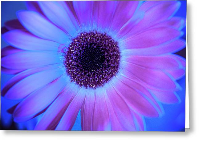 Greeting Card featuring the photograph Promises Of Blue And Pink by Christi Kraft