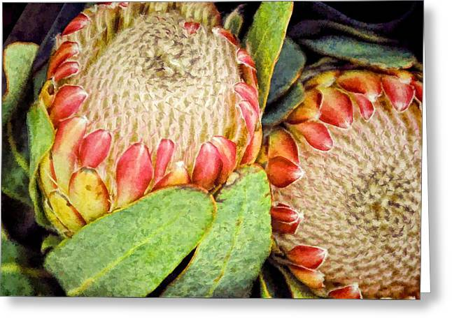 Proteas II Greeting Card by Jan Amiss Photography