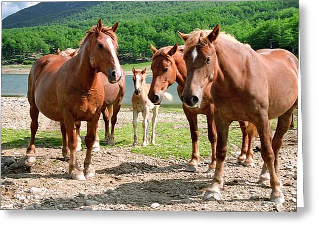 Protecting The Foal Greeting Card