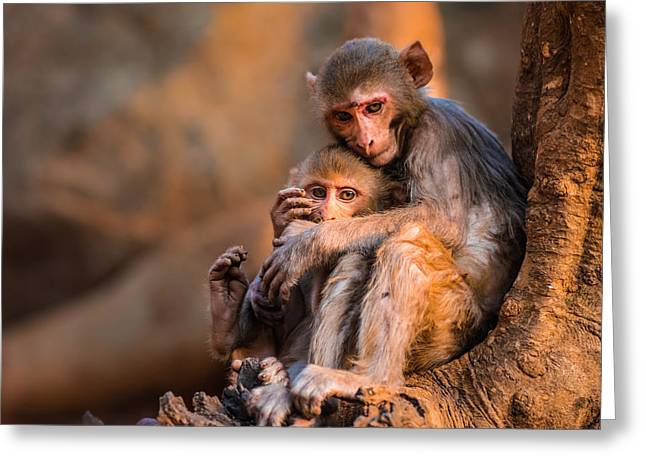 Greeting Card featuring the photograph Protection by RC Pics
