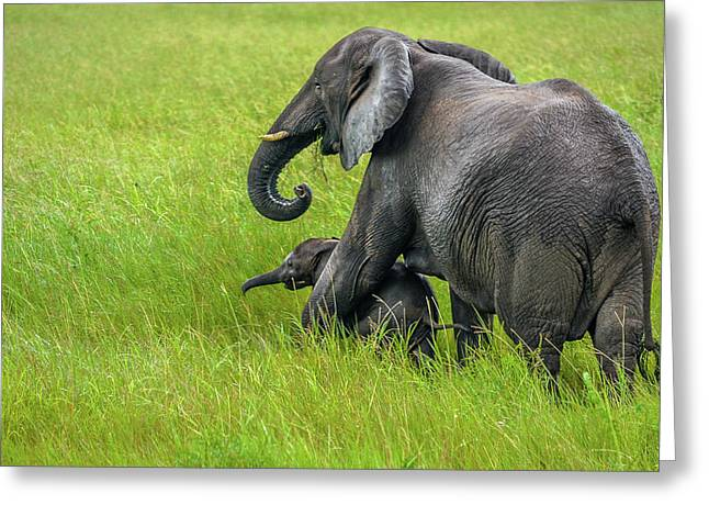 Protective Elephant Mom Greeting Card