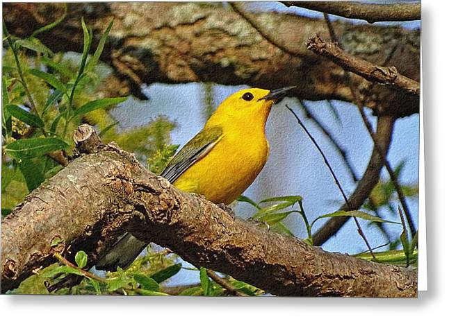 Prothonotary Warbler II Greeting Card