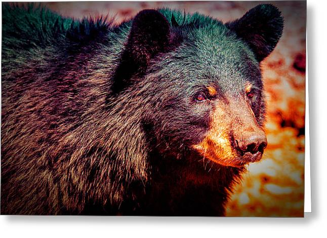Proud Bear Cub Greeting Card by Paul Sommers