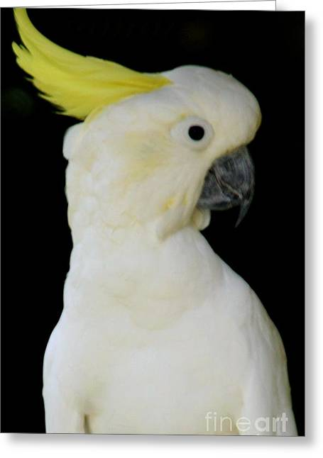 Proud Cockatoo Greeting Card