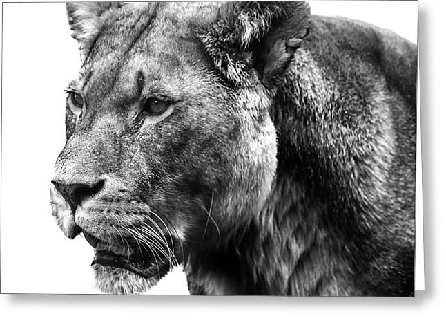 Proud Lioness Greeting Card by Martin Newman