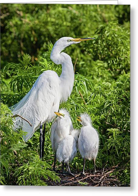 Proud Momma Greeting Card