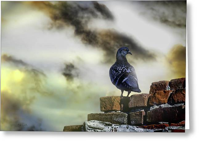 Proud To Be A Pigeon Greeting Card by Bob Orsillo