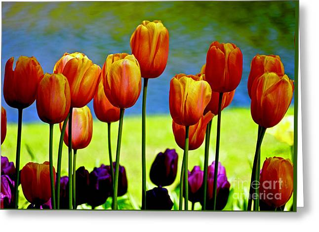 Proud Tulips Greeting Card