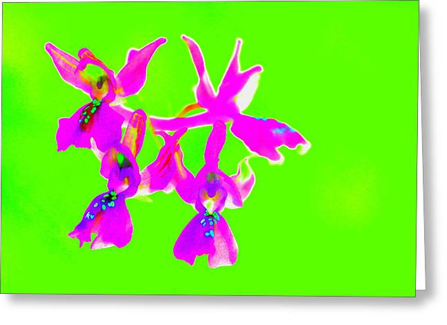Green Provence Orchid  Greeting Card
