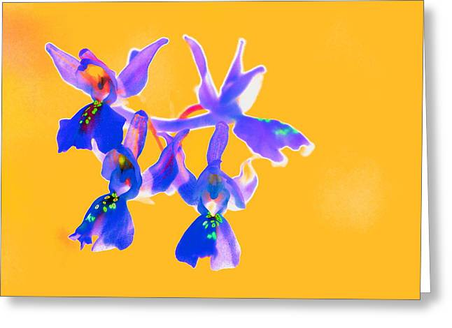 Orange Provence Orchid  Greeting Card