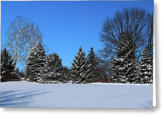 Provincial Pines Greeting Card