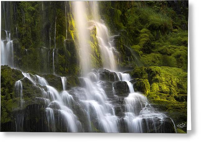 Proxy Falls In Forest Light Greeting Card by Leland D Howard