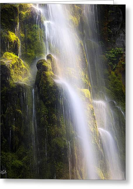 Proxy Falls Soft Light Greeting Card by Leland D Howard