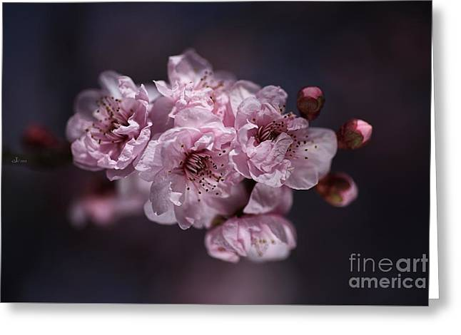Prunus A Pink Spring Greeting Card by Joy Watson