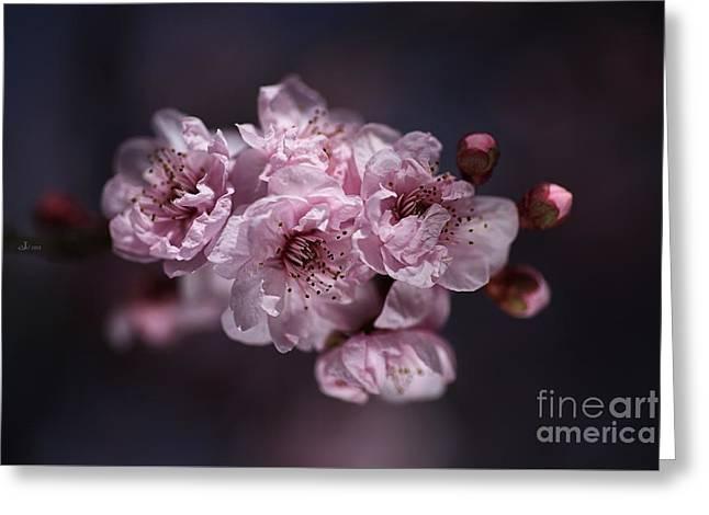Prunus A Pink Spring Greeting Card