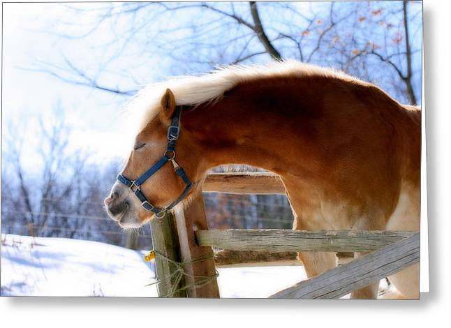 Greeting Card featuring the photograph Pssssssh.....it's Not Cold by Angela Rath