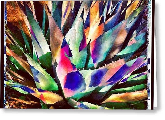 Psychedelic Agave Greeting Card by Paul Cutright