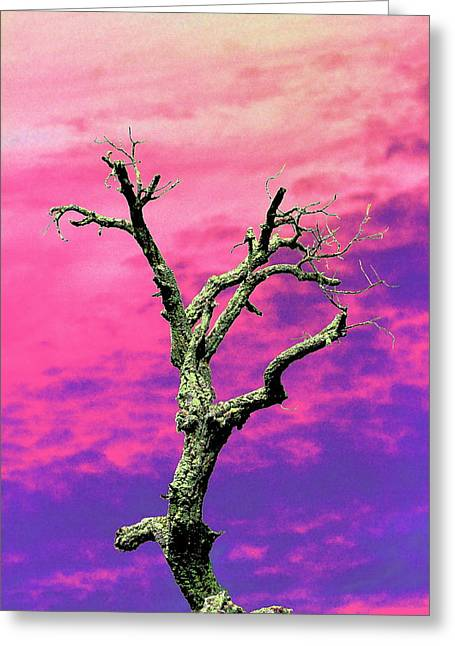 Psychedelic Tree Greeting Card