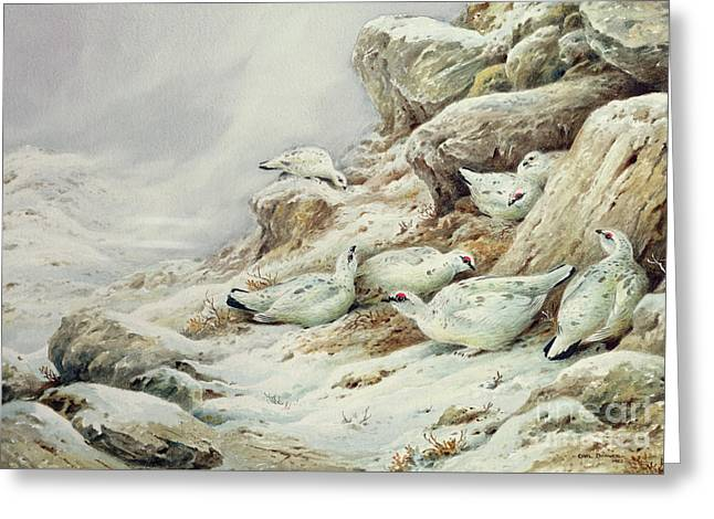 Ptarmigan In Snow Covered Landscape Greeting Card by Carl Donner