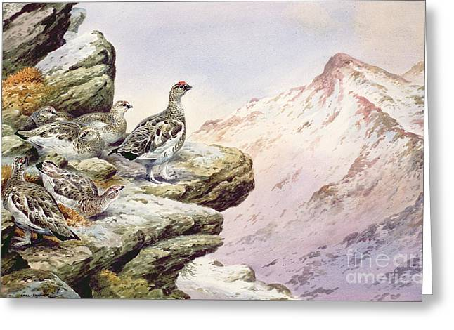 Ptarmigan On The High Tops Greeting Card