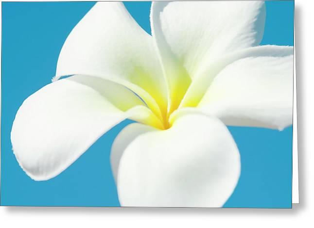 Greeting Card featuring the photograph Pua Melia Pakahikahi by Sharon Mau