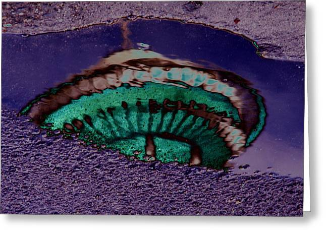 Puddle Needle Greeting Card by Tim Allen