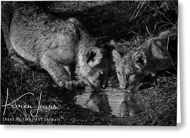 Greeting Card featuring the photograph Puddle Time by Karen Lewis