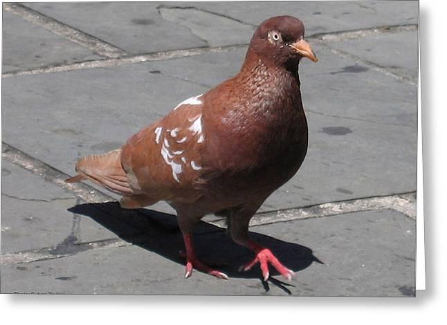 Puerto Rican Pigeon Greeting Card by Suhas Tavkar