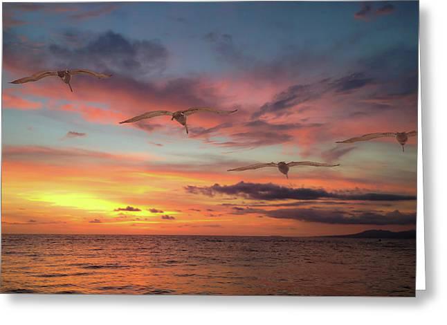 Puerto Vallarta Pelicans Greeting Card