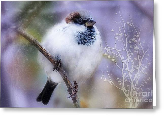 Puffball  Greeting Card by Elaine Manley