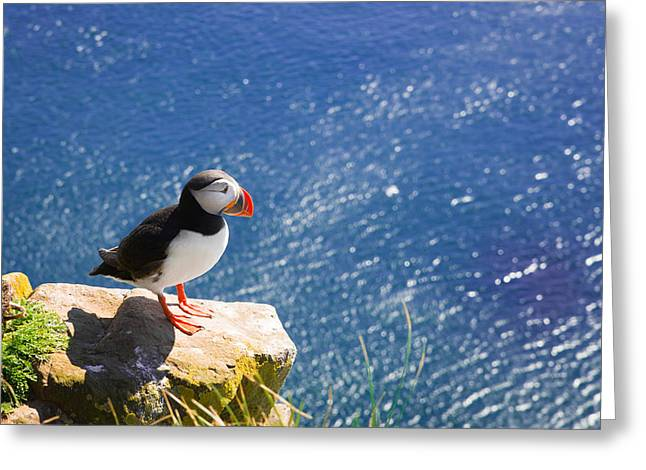 Puffin In Iceland - King Of The Hill Greeting Card by Matthias Hauser