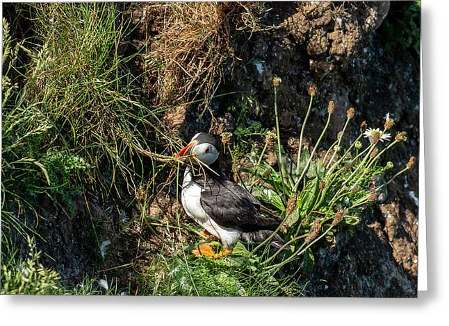 Greeting Card featuring the photograph Puffin On Cliff Edge by Cliff Norton