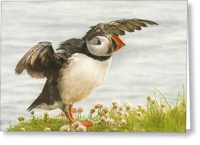 Puffin Taking Flight Greeting Card by John Birnie