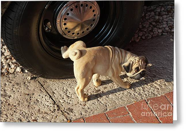 Pug Dog Greeting Card by Juan  Silva