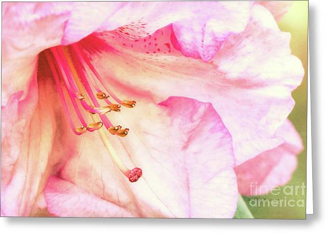 Puget Sound Rhododendron Greeting Card by Jean OKeeffe Macro Abundance Art