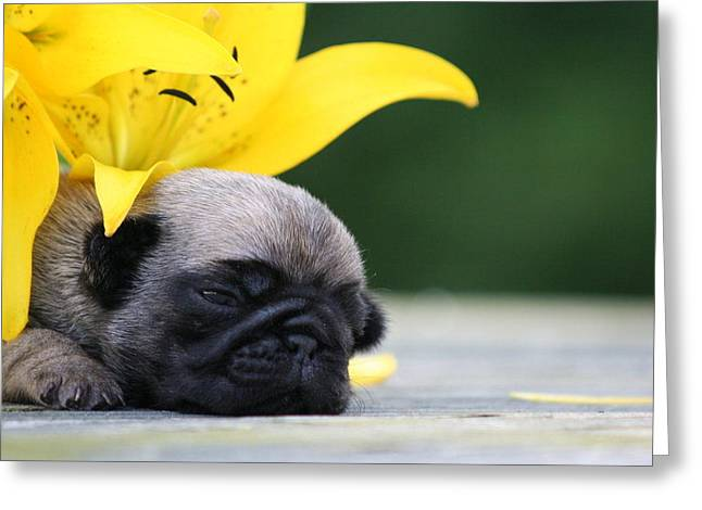 Puggy Face Bouqet Greeting Card