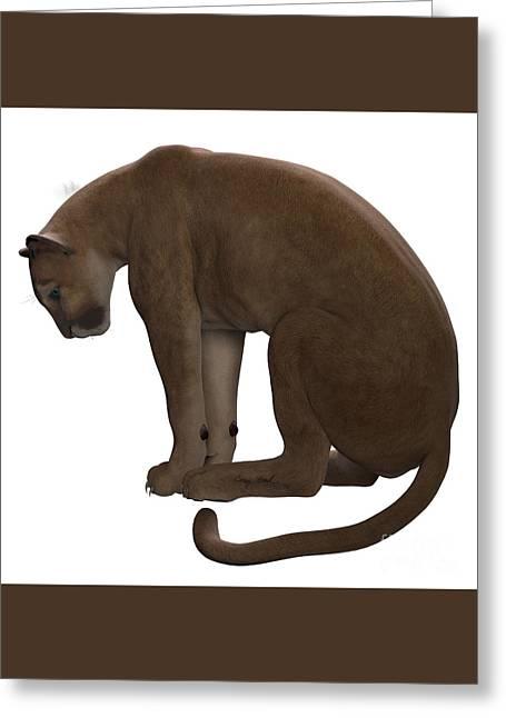 Puma Sitting Greeting Card